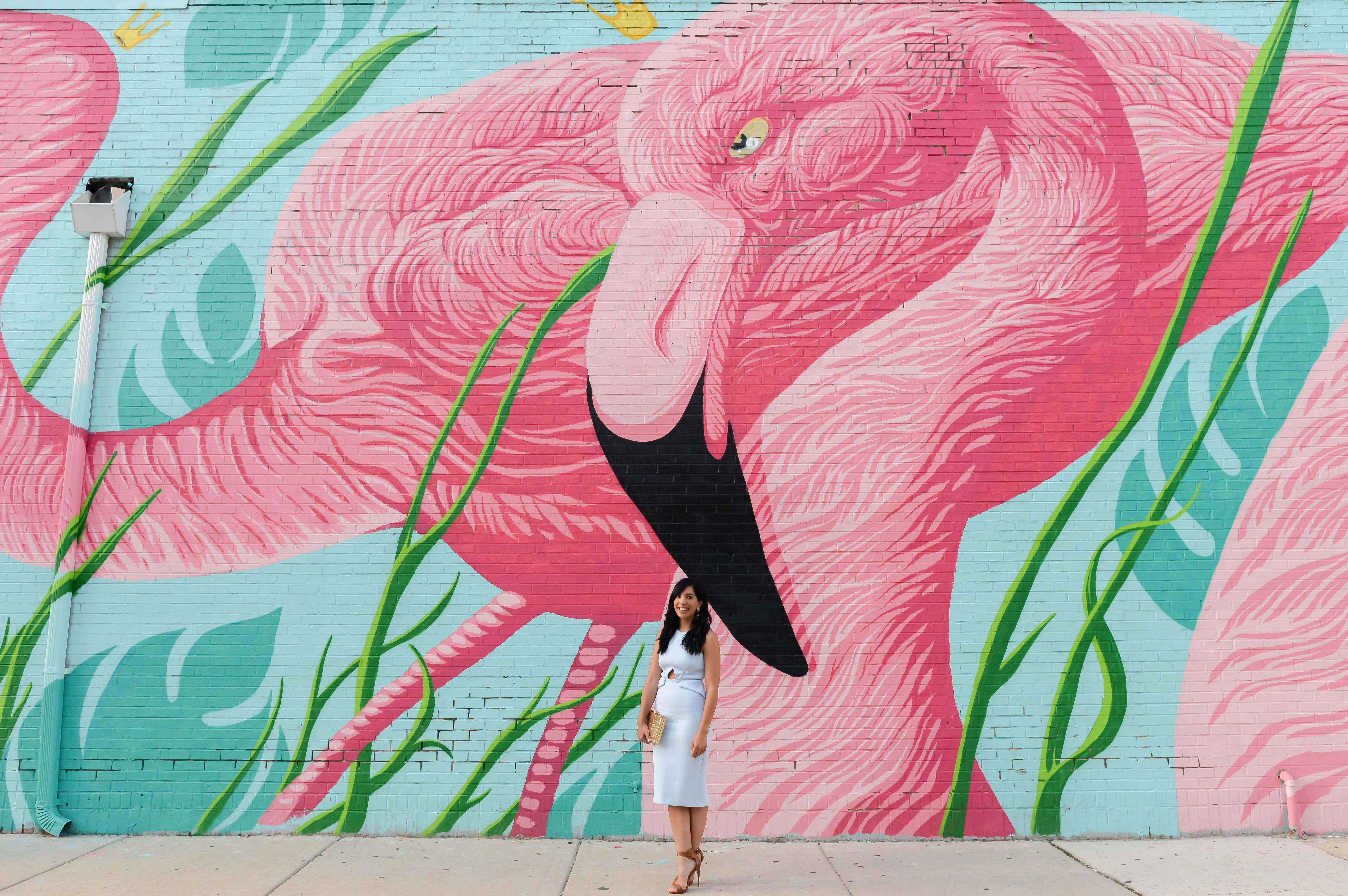 flamingo12